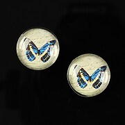 http://www.adalee.ro/23830-large/cabochon-sticla-16mm-colorful-wings-cod-030.jpg
