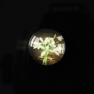 "Cabochon sticla 18mm ""Spring luck"" cod 257"